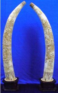 BONE PAIR OF BONE DRAGON TUSKS (F40-DF) This is an Buffalo bone carving. NOT IVORY! All hand carved with lots of Fine Scrimshaw detail. The Dragons Are Exquisite!