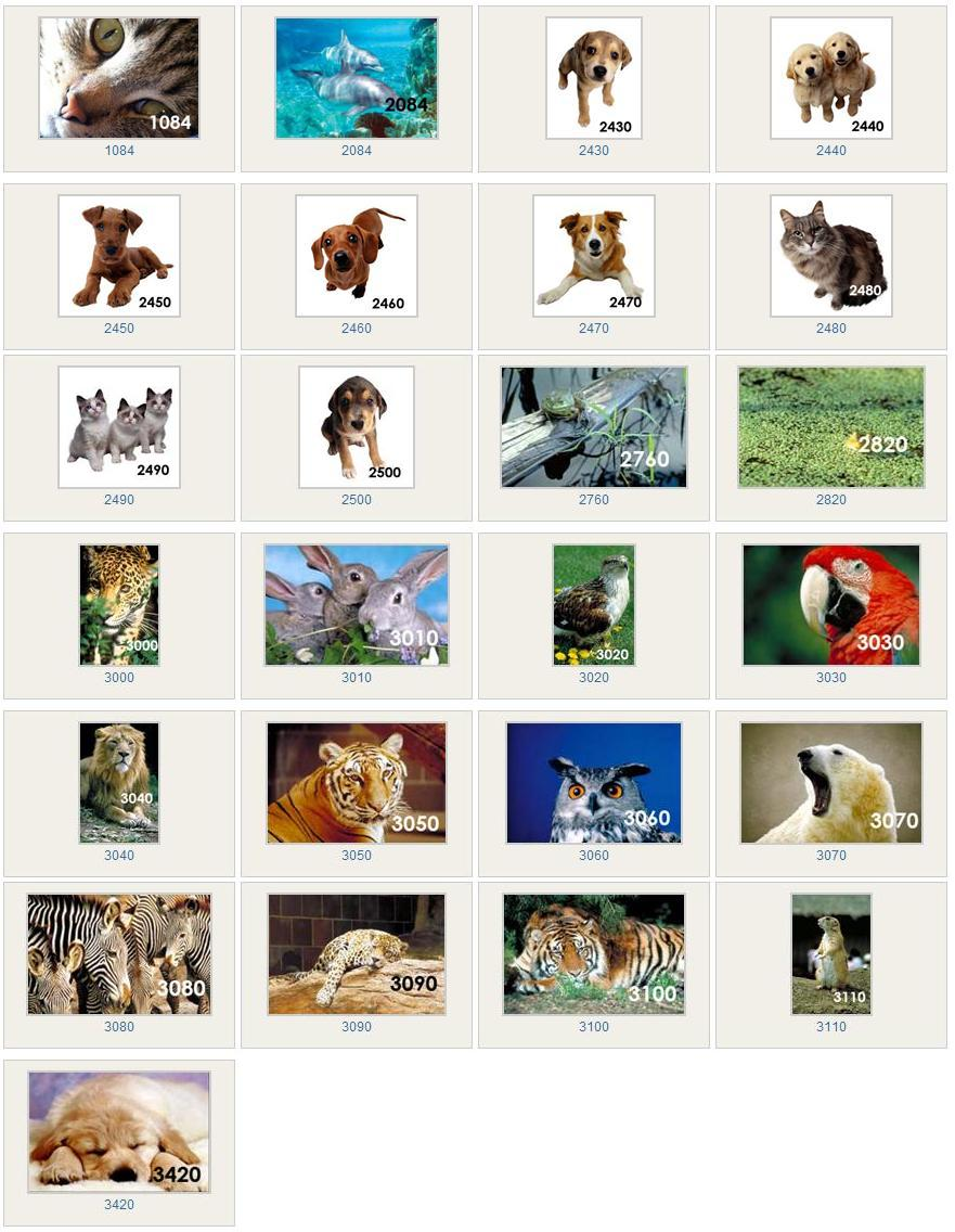 animal ceiling light lens images