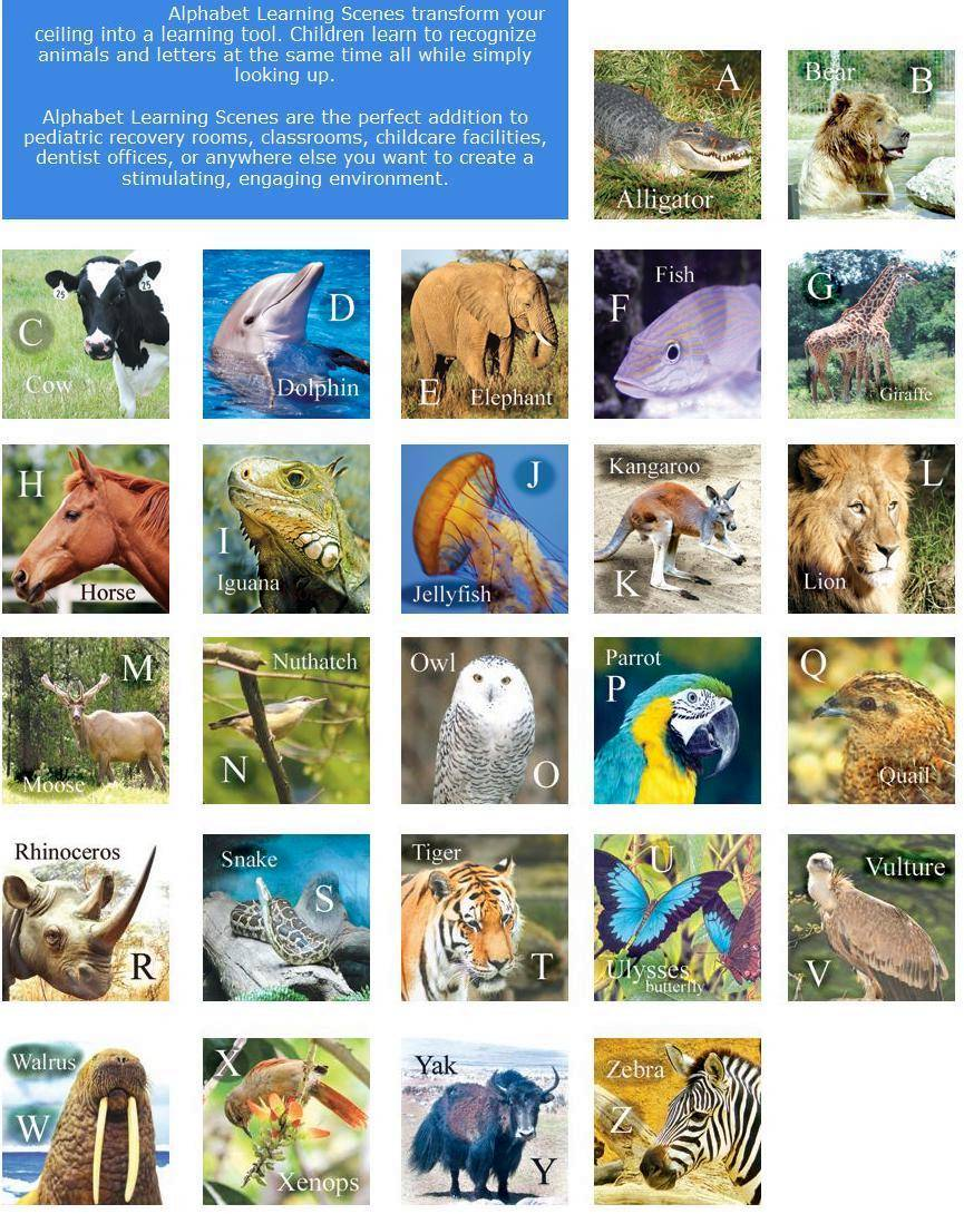 List of Animals A-Z submited images.
