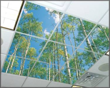 Item # 1030, Birch Up View, ceiling light lenses or acoustic tiles with photos printed on the surface