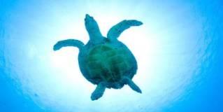 sky ceiling cloud light lens Item # Turtle Light Lens ... Price $44.97 + S/H