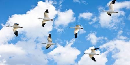 sky ceiling cloud light lens Item # Birds Sky Panel ... Price $39.95 + S/H
