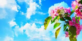 sky ceiling cloud light lens Item # Blossom ... Price $44.97 + S/H