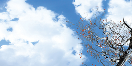 sky ceiling cloud light lens Item # Fall Trees ... Price $39.95 + S/H