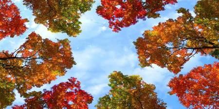 sky ceiling cloud light lens Item # Fall Trees ... Price $44.97 + S/H