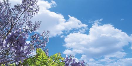 sky cloud ceiling lens diffuser