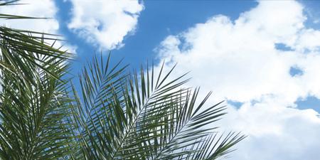 sky ceiling cloud light lens Item # Palm Tree Sky ... Price $39.95 + S/H