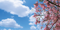 sky ceiling cloud light lens Item # Pink Tree Sky Diffuser ... Price $39.95 + S/H
